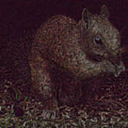 Squirrely Art Art Print