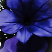 Squish Blossom Art Print