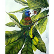 St. Lucia Parrot And Fruit Art Print