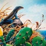 St. Lucia Whiptail Art Print