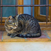 St Paul Cat Art Print
