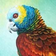 St. Vincent Parrot Art Print