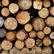 Stacked Timber Two Art Print