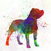 Staffordshire Bull Terrier In Watercolor Art Print