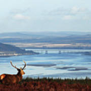 Stag Overlooking The Beauly Firth And Inverness Art Print