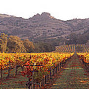 Stags Leap Wine Cellars Napa Art Print