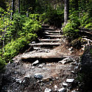 Stair Stone Walkway In The Forest Art Print