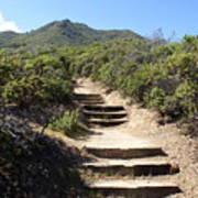 Stairway To Heaven On Mt Tamalpais Art Print