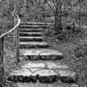 Stairway To Nature Art Print
