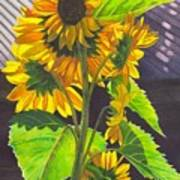 Stalk Of Sunflowers Art Print