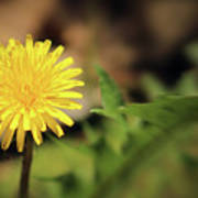 Stand Out - Dandelion Art Print