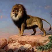 Standing Lion Art Print