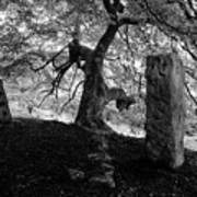 Standing Stones Near The Tree Art Print