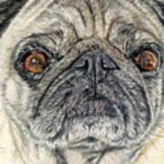 Stanley Art Print