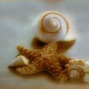 Star And Shells Art Print