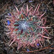 Star Cactus Pink-aqua-blue Art Print