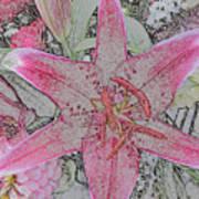 star Flower as Pencil Sketch Art Print