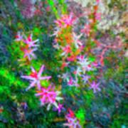 Star Flowers Shine Art Print