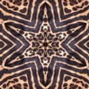 Star Of Cheetah Art Print