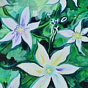 Star Of The Garden Art Print