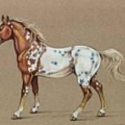 Star Spangled Horse Art Print