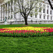 Star Tulips Art Print