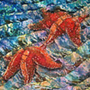 Starfish 1 Art Print
