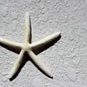 Starfish 2016 Art Print