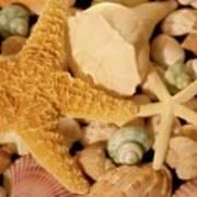Starfish And Seashells Art Print
