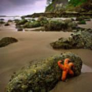 Starfish On The Rocks Art Print