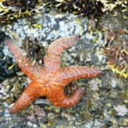 Starfish Running Art Print