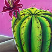 Stargazer Cactus Art Print