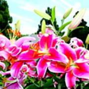 Stargazer Lilies #1 Art Print