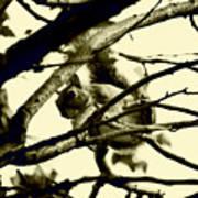 Staring Squirrel Art Print