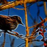 Starling In Winter Garb - Fractal Art Print