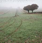 Starling Murtmuration In Foggy Misty Autumn Morning Landscape In Art Print