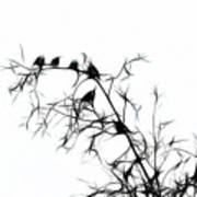 Starlings Art Print
