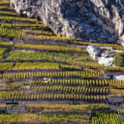 Steep Slope Viticulture In Valais Canton Art Print