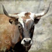 Steer Bull Art Print