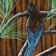 Stellar Jay Art Print by Jennifer Lake