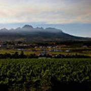 Stellenbosch Vineyard Art Print