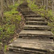 Step Trail In Woods 17 A Art Print