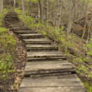 Step Trail In Woods 17 B Art Print