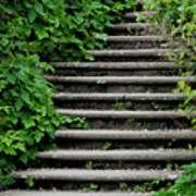 Steps With Ivy Art Print