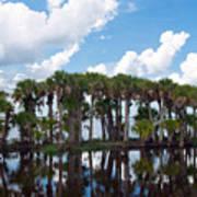 Stick Marsh In Fellsmere Florida Art Print
