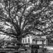 Still Faithful B W God Bethany Presbyterian Church The Old Oak Tree Greene County Georgia Art Art Print