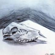 Still Life Drawing Cow Skull 02 Art Print