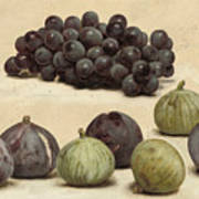 Still Life Of Grapes And Figs Art Print