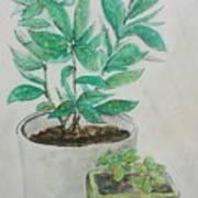Still Life Plants Art Print