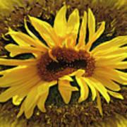 Still Life With Sunflower Art Print
